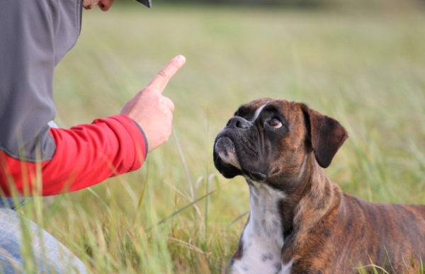 How to wean a dog eat feces