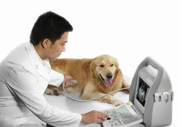 do ultrasound to the dog