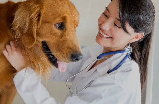 A dog's examination by a veterinarian