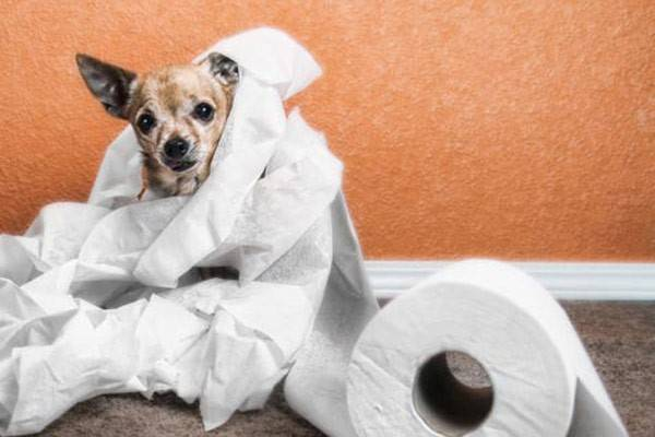 Signs of diarrhea in dogs