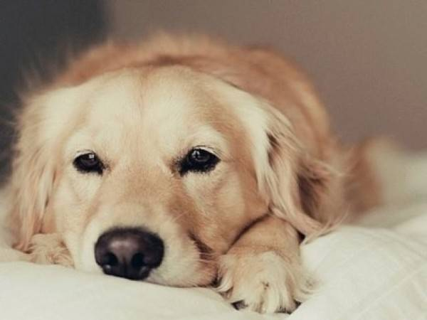 Signs of cystitis in dogs