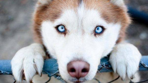 beautiful eyes at the dog