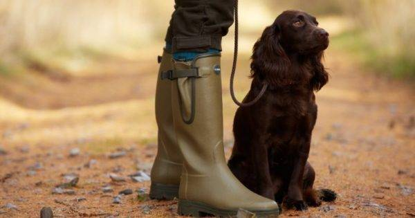 Field-spaniel and man