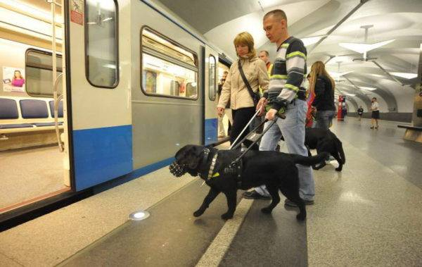 Guide dogs in the metro