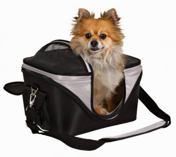 Dog in carry
