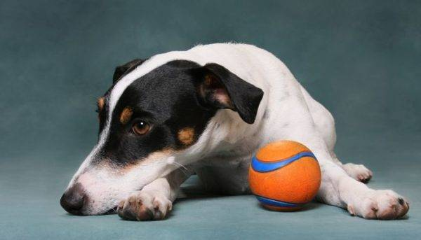 Arthritis in dogs read the article