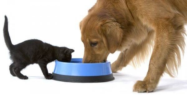 cat and dog eat