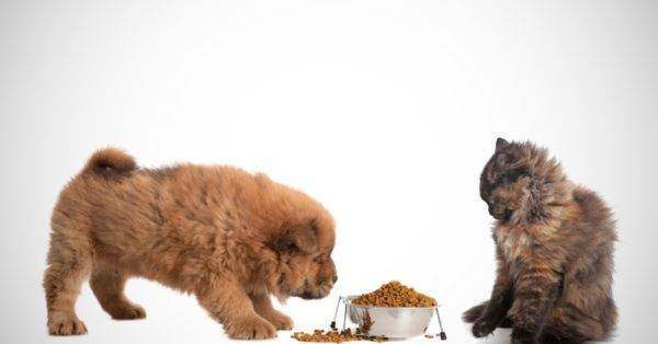 Is it possible to give the dog cat food read the article