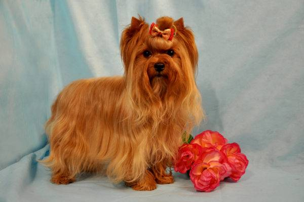 Russian salon dog with flowers