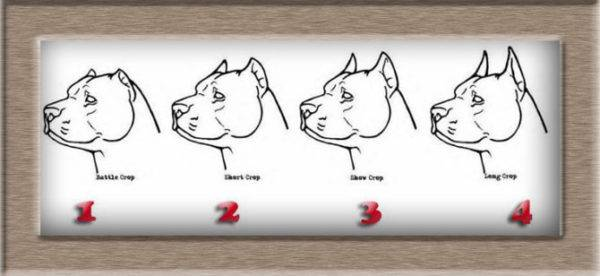 4 types of cupping of ears in dogs